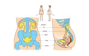 Urinewegen